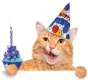Geburtstagshase Alles Gute Zum Geburtstag Wunsche Geschenke