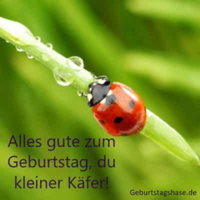 Alles gute zum Geburtstag, du kleiner Käfer!